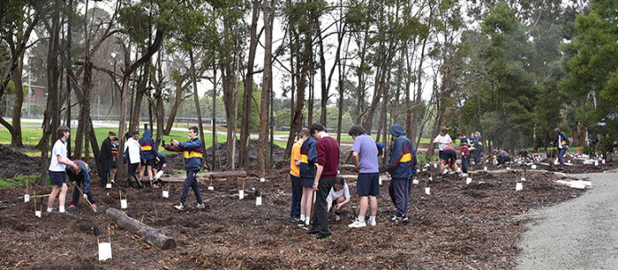 Tree Planting Gallery (7) - Copy